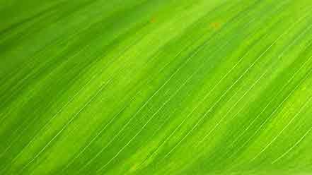 Couleur vert pour le web
